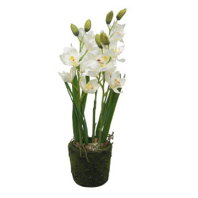 3 Stems Orchid With Moss Rock Pot - 67cmh