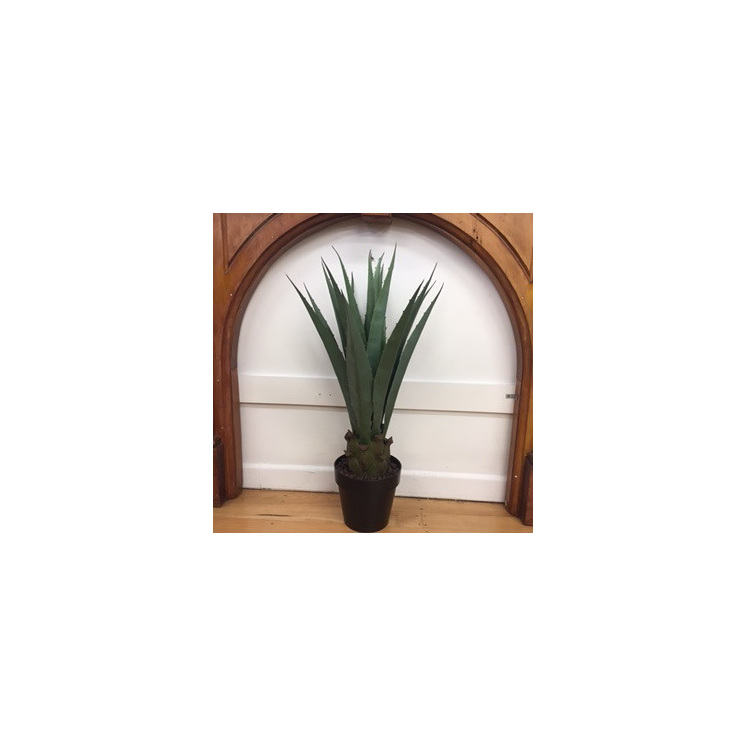 Agave Americana Potted 80cm