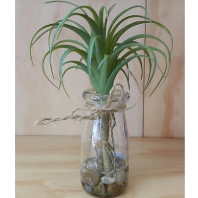 Air Plant In Vase