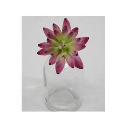 Albiflora Sedum - Cerise - 10cm
