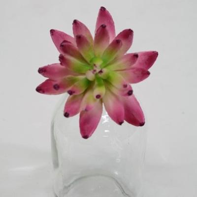 Albiflora Sedum Pick Cerise