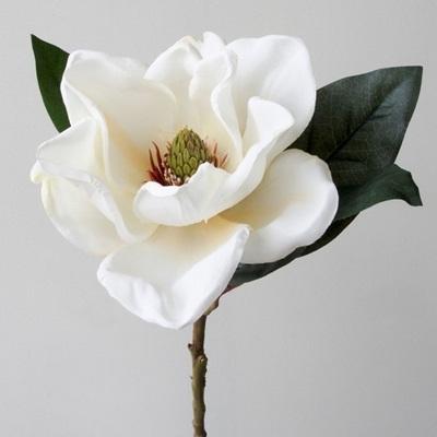 American Magnolia 71cm Cream