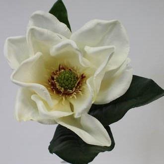 American Magnolia - Cream - 71cmh