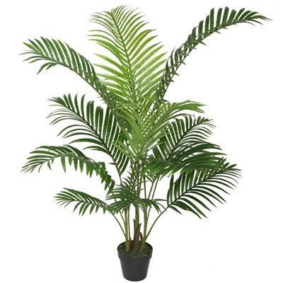 Areca Palm With Black Pot - 1.2m