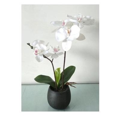 Artificial Orchid In Black Pot - Cream White 35cm