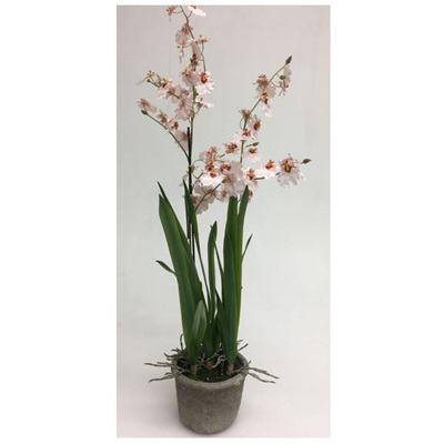 Artificial Pink Dancing Orchid With 2 Stems In Ceramic Pot - 80 cmh