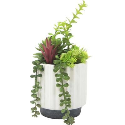 Asst Succulents W White Pot H24x11cm