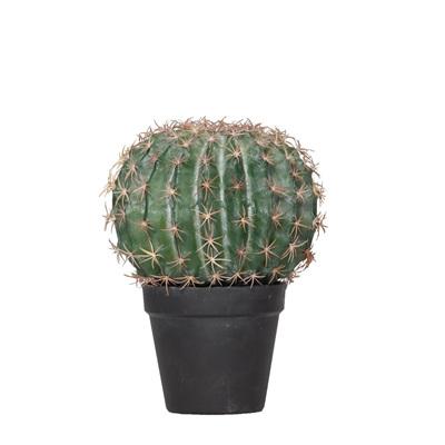 Barrel Cactus 24cm