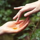 Benefits of rose-hip oil