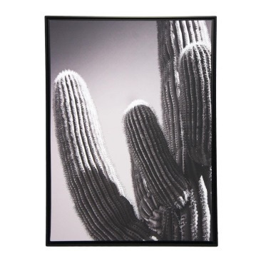 Black And White Cactus Framed Print Canvas