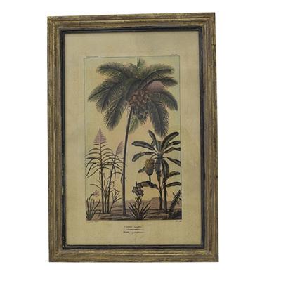 Botanical Wall Art Coconut Tree Species