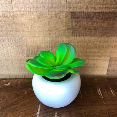 Botanics Decorative Succulent Mini
