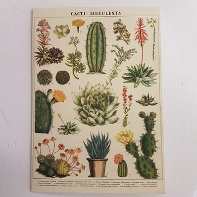 Cacti Succulents Greeting Card