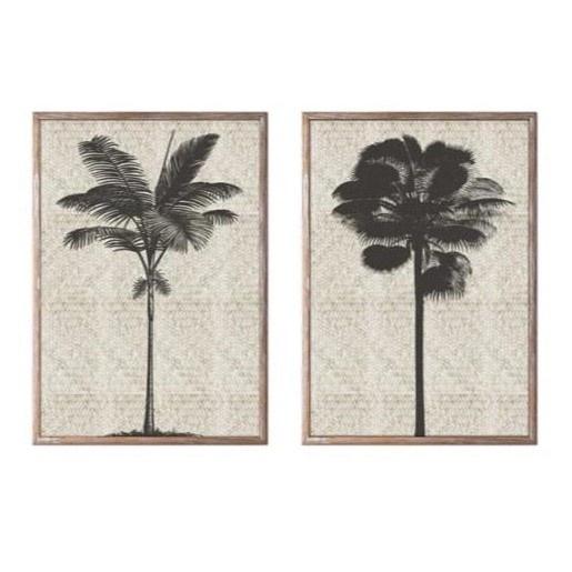 Coconut Palm Framed Print In Glass 70x50cm