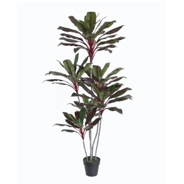 Cordyline Fruticosa W/Pot-Red&Green 180cm