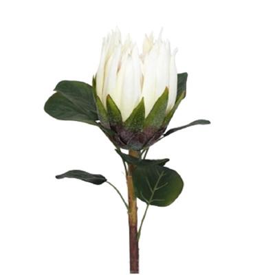 Cream Protea - 62cmh
