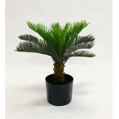 Cycad Palm - Potted