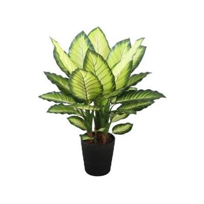 Dieffenbachia Potted 90cm - Yellow/Green