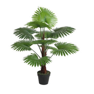 Fan Palm Potted 100cm