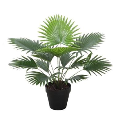 Fan Palm W/Pot -Green - 50cm