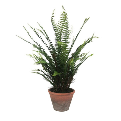 Fern Tree W/ Terracotta Pot - 65x57cmh