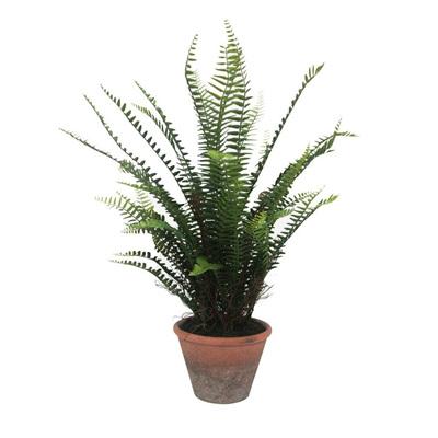 Fern Tree W/ Terracotta Pot - 65x57cmh