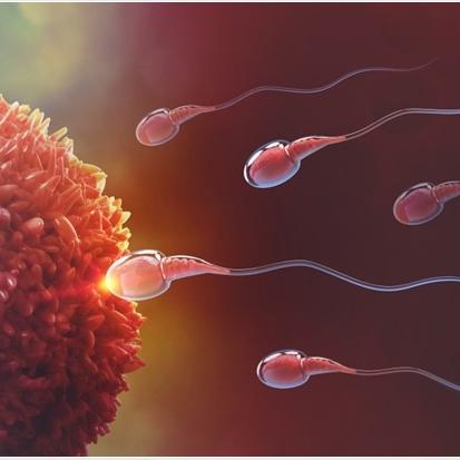 Fertility & Ovulation