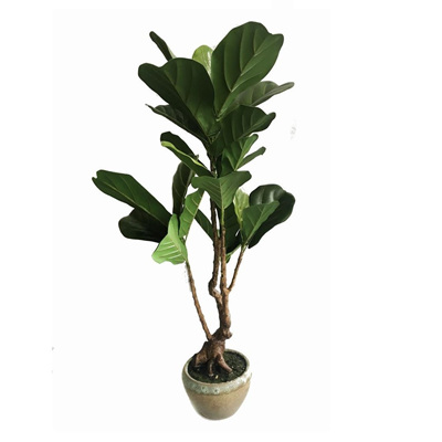 Ficus Tree W/ Decorative Pot - 93cmh