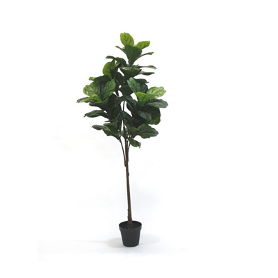 Fiddle Tree Potted 1.4m