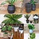 Foliage & Planters