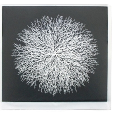 Framed Coral Art - White/Black  90x90cm