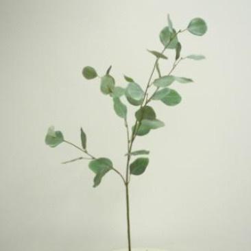 France Eucalyptus - 90cmh