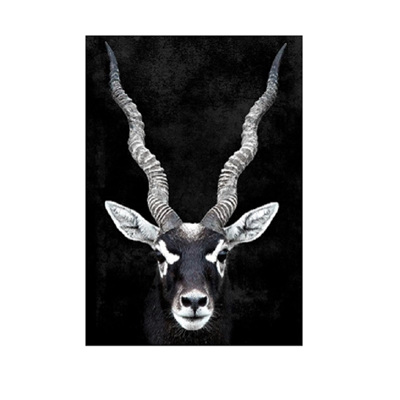 Gary Gazelle Canvas Print - Natural Frame 100x140cm