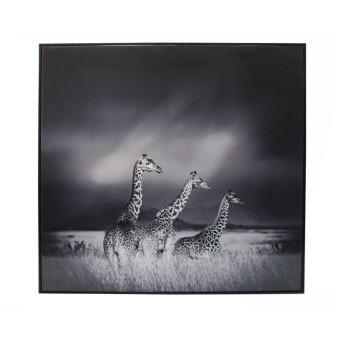 Giraffe Family Canvas Print - Black Matt Frame 100 x 100cmh