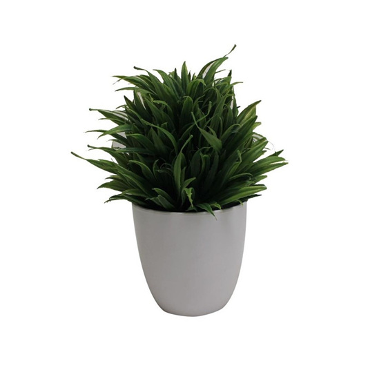Grass In White Pot 28cmh