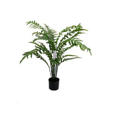 Hares Foot - Potted Fern 1mtr