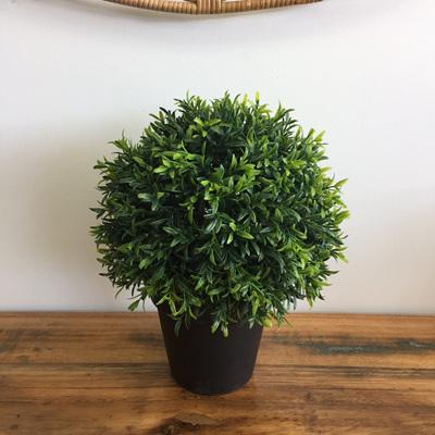 Hedge Topiary In Black Pot