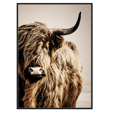 Himalayan Cattle Canvas Print