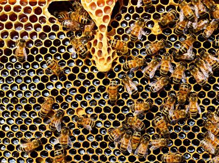 Honey & Food