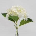 Hydrangea Short Stem - White