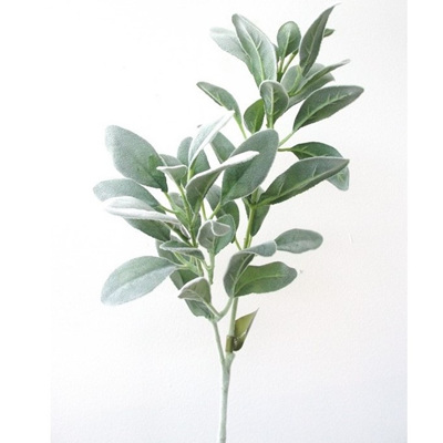 Lambs Ear Long Stem - Green - 71cm