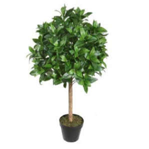 Laurel Topiary W/Pot
