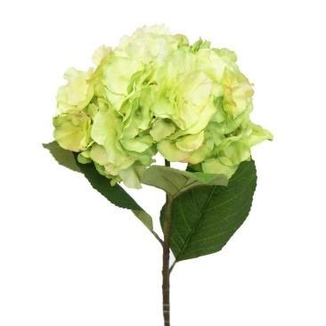 Lovely Hydrangea - Green 63cm