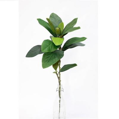 Magnolia and Bud Leaf Spray