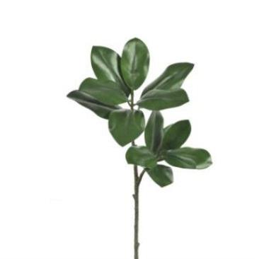 Magnolia Branch - 83cmh