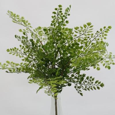 Maidenhair Medium - Green - 43cm