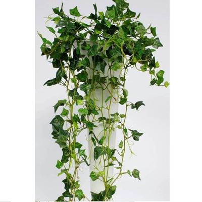 Mini English Ivy Bush 382leaves
