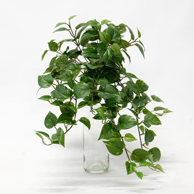Mini Pothos Hanging Bush - 56cm