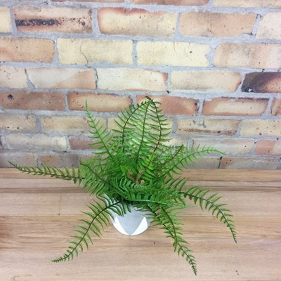 Native Fern Bush - Medium