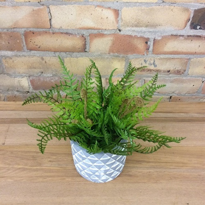 Native Fern Bush - Small